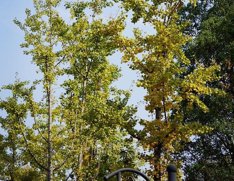感受秋的季节和温度的美好 (5).jpg