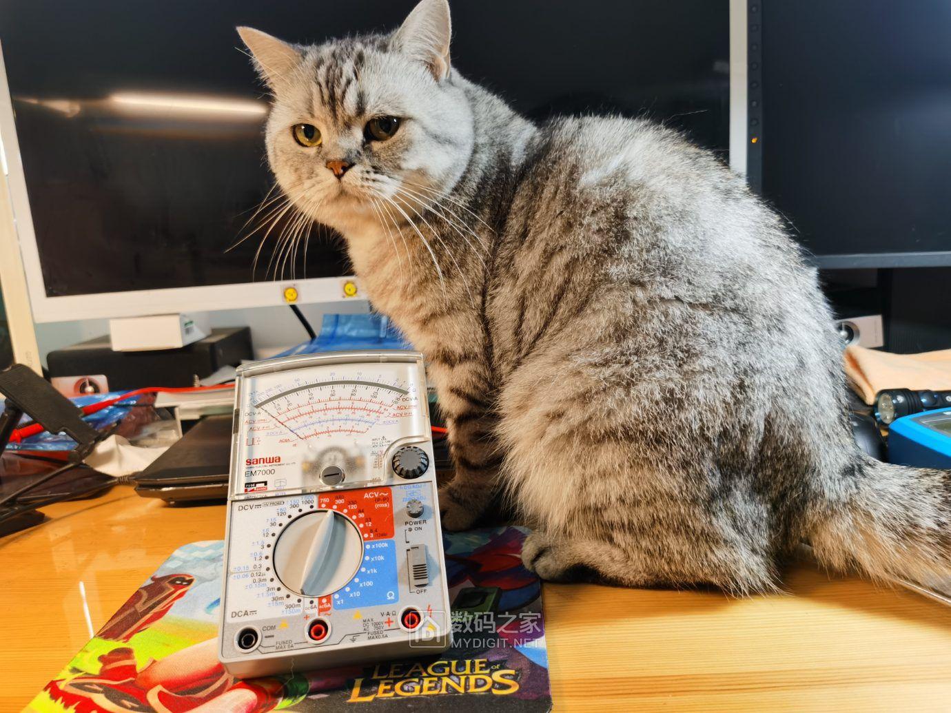 65.猫猫好奇.jpg