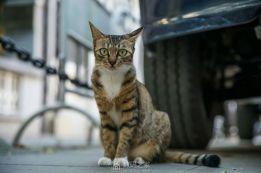 一组小猫咪萌照