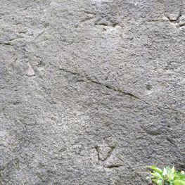 好大的鸡脚印!——侏罗纪早期的双脊龙足迹化石