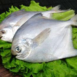 海捕野生银鲳鱼 29.9元,食族人重庆正宗锅巴酸辣粉6桶19.8元包邮